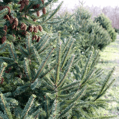 Christmas Tree Farm Owners