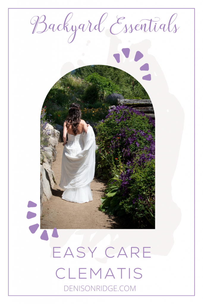 Backyard Essentials ~ Easy Care Clematis
